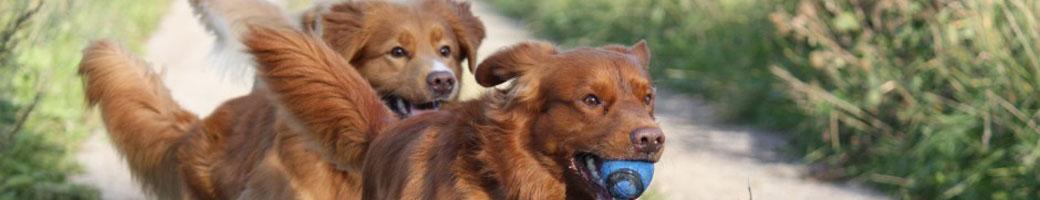 Hundkurser hos Marys hund och Canis hundskola
